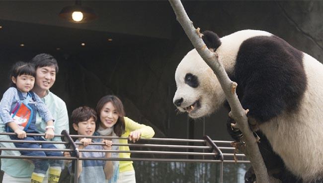 中國熊貓亮相韓國