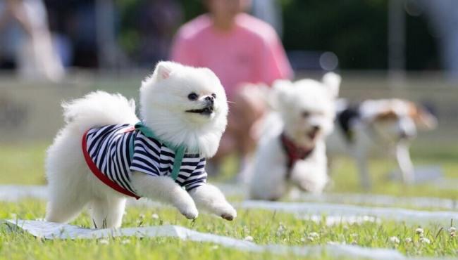 韓大學舉辦狗狗運動會
