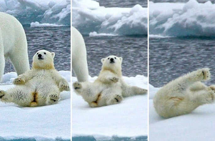 북극 곰의 사랑스러운 모습