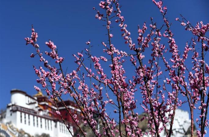 봄이 찾아온 라싸