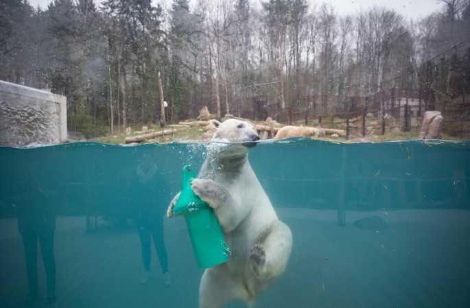 물속에서 장난치는 북극곰 너무 귀여워