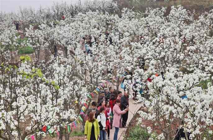 꽃 경제'가 마을을 치부케
