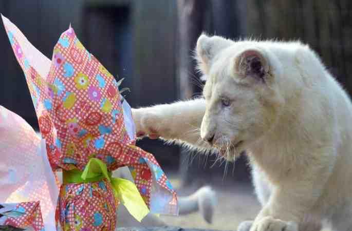 부활절 선물 받은 동물들 급히 소포 뜯는 모습 너무 귀여워