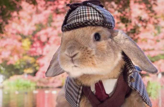 제복 입은 토끼, 훈남 닮아...인터넷에서 핫 인기