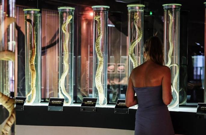 태국 방콕: 뱀 박물관을 찾아서