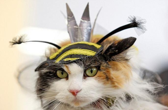 우크라이나 보기드문 고양이 패션쇼