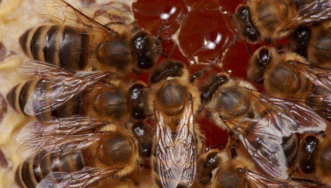 【視頻】韓國:城市養蜂悄然興起