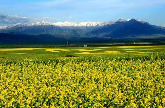유화같은 中간쑤 치롄산 아래의 백화만발한 초원