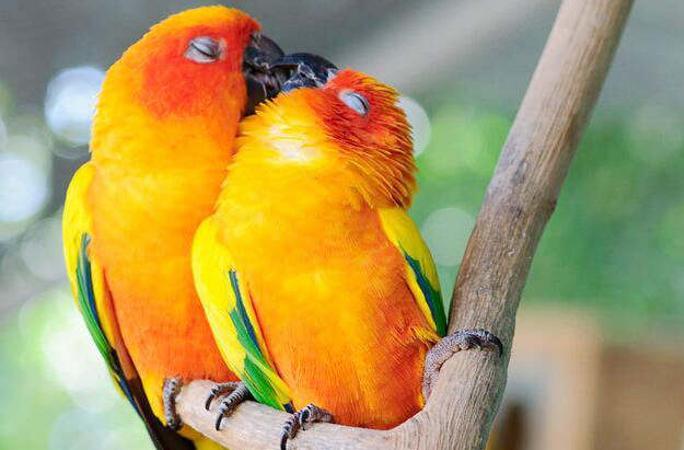 솔로 탈출! 동물들의 아름다운 사랑 고백