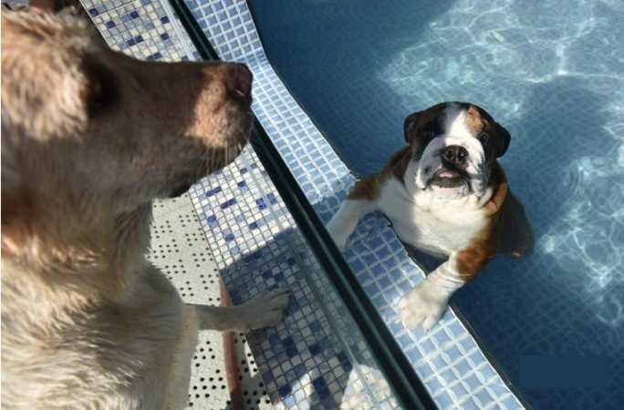 폭염에 반려동물 수영장 인기, 예약 줄이어