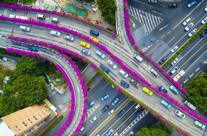 도로변 꽃이 만개… 광저우 고가도로 '자홍색 꽃길'로 변신