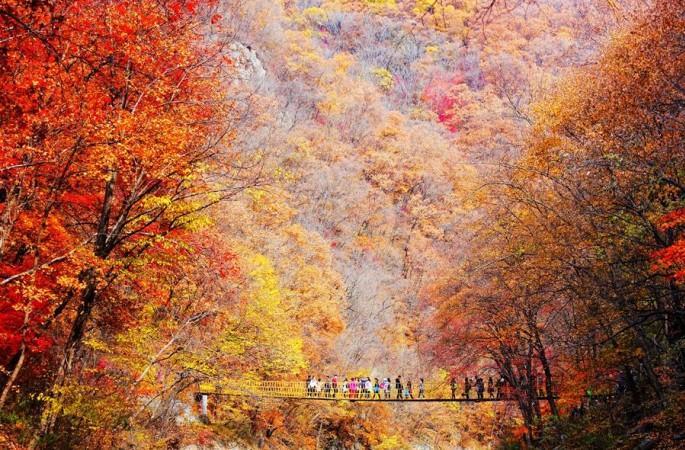 가을 팔레트…오색찬란한 색의 향연