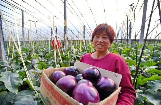 허베이 보터우: 단경기채소 재배로 농한기 소득 증대
