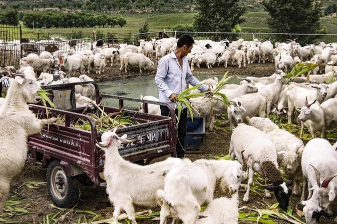 (개혁개방 40년 경축) '마오우쑤'에서 느끼는 생명력
