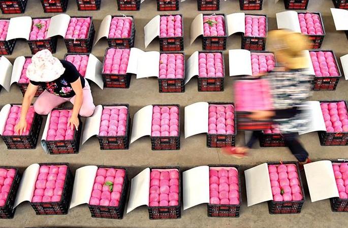 산둥 이위안: 입추는 다채로운 수확 계절